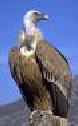 Сама птица не уцелела, но остатки перьев позволили специалистам...